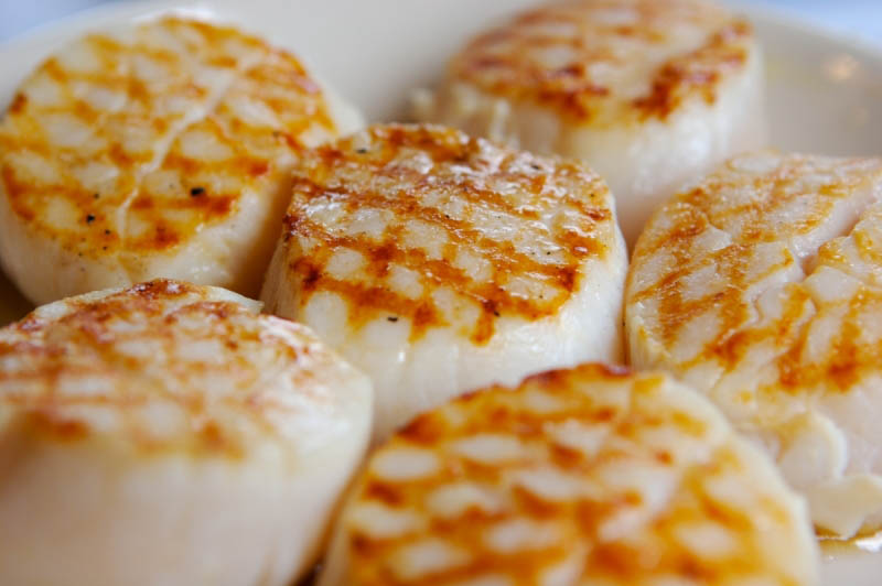 FYI-day FACTS: Scallops!